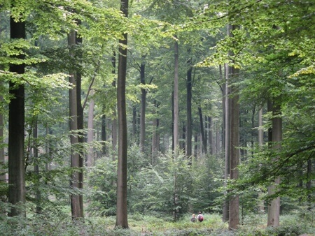 forest in Brussel