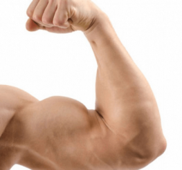 Difference between Biceps and Triceps