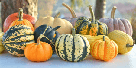 types of squashes