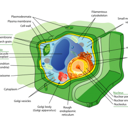 Difference between Plant Cells and Animals Cells