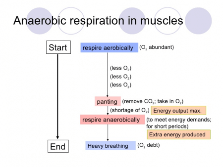 diagram of an anaerobic respiration
