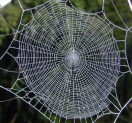 Difference between a Spider Web and a Cobweb