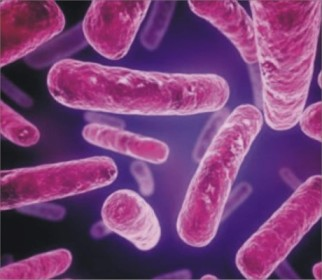 Difference Between Archaea and Bacteria