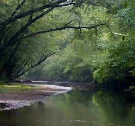 Difference Between River and Creek